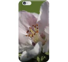 Beauty Lost In Green Sea iPhone Case/Skin