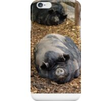 Sleeping Pot Bellied Pigs iPhone Case/Skin