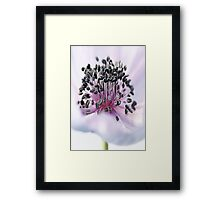 The Anemone Framed Print