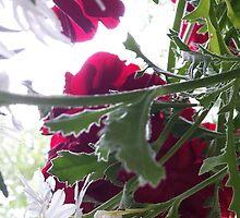 Wild Flowers by HummingbirdJazz