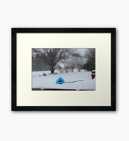 Bitter Blue Framed Print