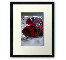 Betrayed Roses Framed Print