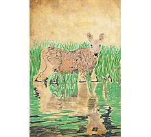 Baby Moose Photographic Print