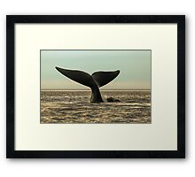 Right Whale with her calf Framed Print