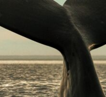 Right Whale with her calf Sticker