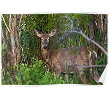 Deer napping Poster