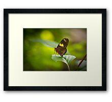 Perched on a  Leaf Framed Print