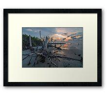 Tree Stump - St. George Island Framed Print