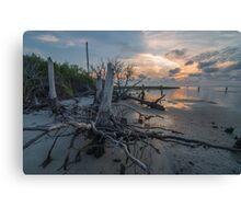 Tree Stump - St. George Island Canvas Print