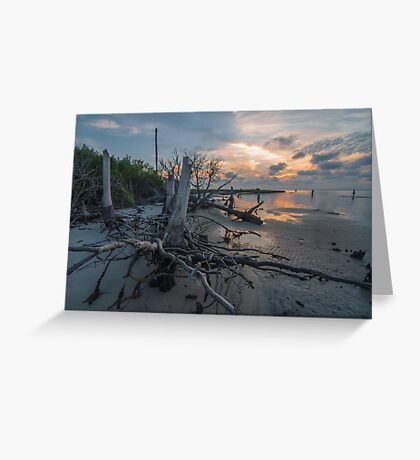 Tree Stump - St. George Island Greeting Card