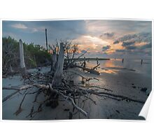 Tree Stump - St. George Island Poster