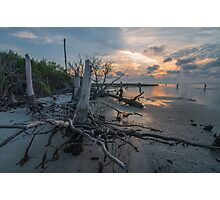 Tree Stump - St. George Island Photographic Print