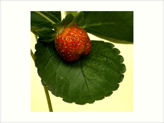 528 Strawberry by pcfyi