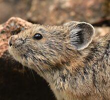 Rock Rabbit's Profile by DWMMPhotography