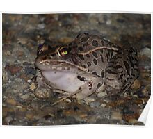 Slimey frog/ snake. Poster