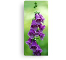 Foxglove (Dalmation Purple) Canvas Print