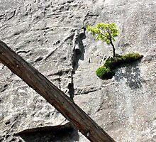 Determined Tree by Matthew Eakin
