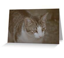 Kitty v.2 Greeting Card