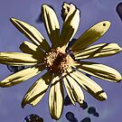 Luv those Daisy's by Lozzar Flowers & Art