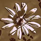 I'm loving those Daisy's by Lozzar Flowers & Art