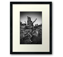 Strong Populus Framed Print