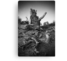 Strong Populus Canvas Print