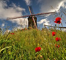 Windmill poppies  by Rob Hawkins