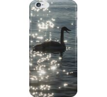 Singing Trumpeter Swans - Lake Ontario, Toronto iPhone Case/Skin