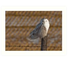 Perched Over Winter Fallow Art Print