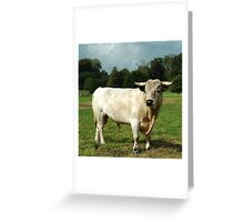 Harry the happy white bull Greeting Card