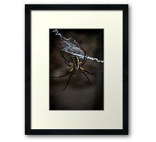 Yellow Garden Spider Framed Print