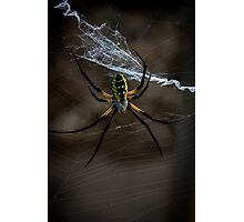 Yellow Garden Spider Photographic Print