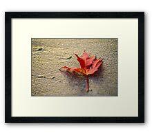 Solitary Leaf Framed Print