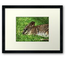 Parma Wallaby Framed Print
