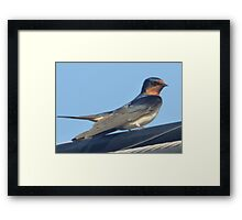 Bird on a wire. Framed Print