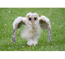 Baby Barn Owlet Owl Chick Photographic Print