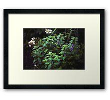 Mint I Framed Print