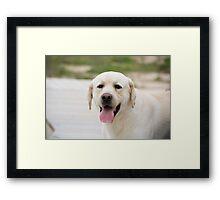 dog Framed Print