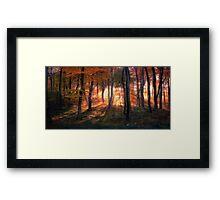 Autumn Morning Woods Framed Print