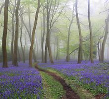 Bluebells in the Mist by Photokes