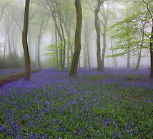 Morning Bluebell Woods in the Mist by Photokes