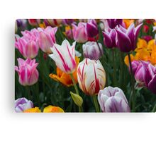 Field of Tulips - Spring Photgraphy Canvas Print