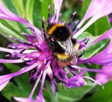 Little Bumble Bee Sticker