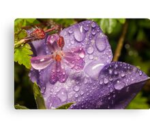 Geranium molle with campanula covered in raindrops Canvas Print