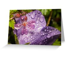 Geranium molle with campanula covered in raindrops Greeting Card
