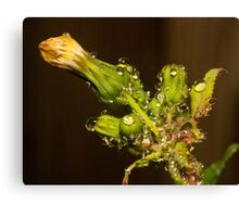 waterdrops and Aphids Canvas Print