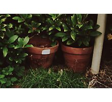 Plant pots Photographic Print