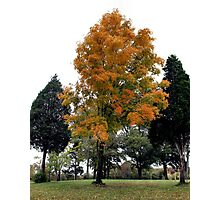 """""""Fall in West Knoxville, Knoxville, Tennessee, # 3""""... prints and products Photographic Print"""