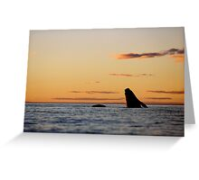 Right Whale with her calf at sunset Greeting Card