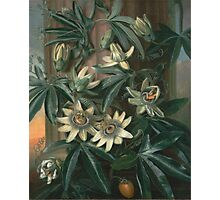 Philip Reinagle - Blue Passion Flower 1800. Still life with flowers: still life with flowers, flowers, blossom, nature, botanical,  leaves, wonderful flower, plants,  leaf, garden,  passion Photographic Print